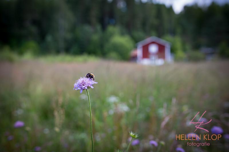 018 Zweden 2950 LR