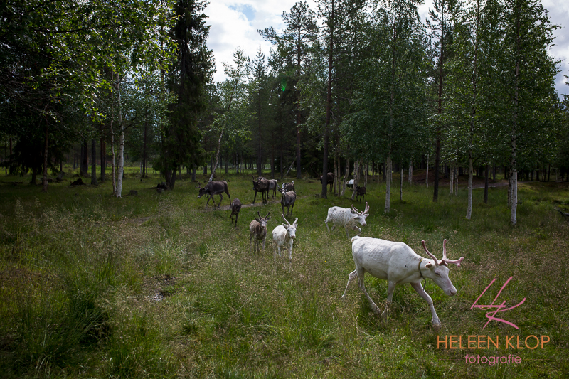 152 Zweden 3497 LR