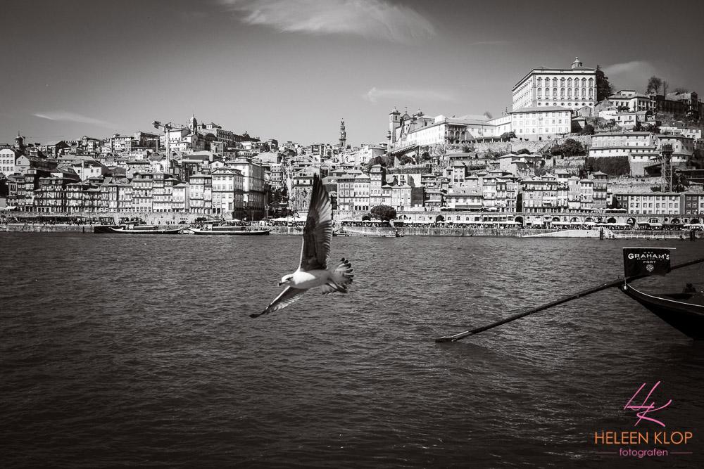 036 Porto Portugal