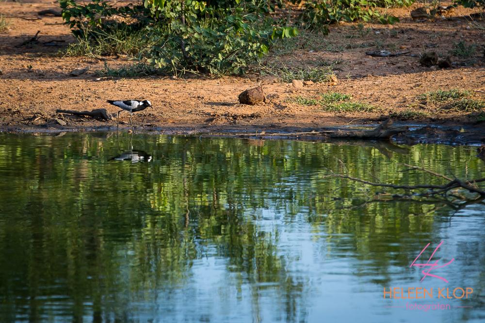 Watervogel in Zuid Afrika