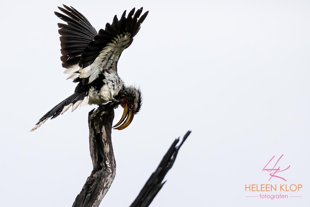Vogels van Zuid Afrika