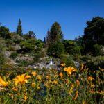 Bruidsreportage Botanische Tuinen