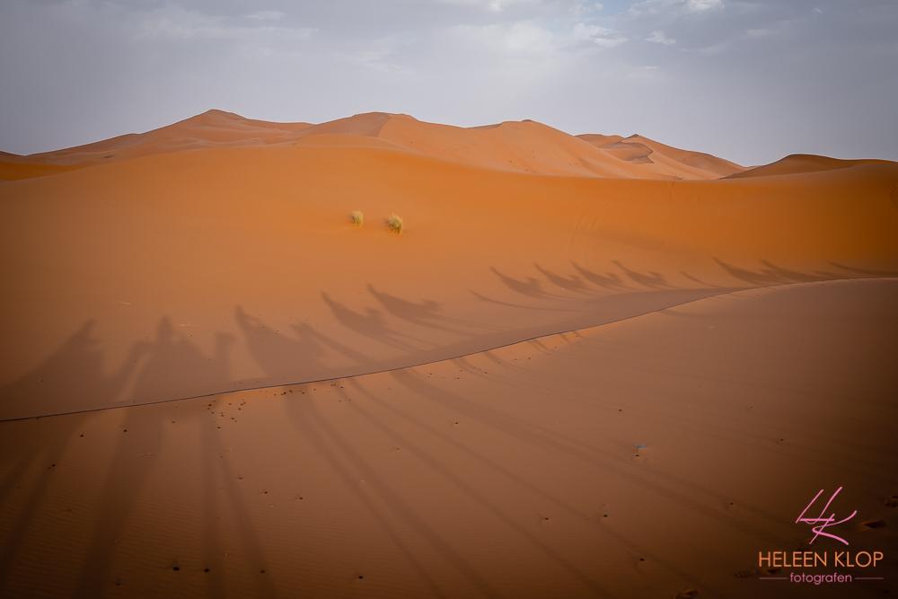 Karavaan Erg Chebbi woestijn