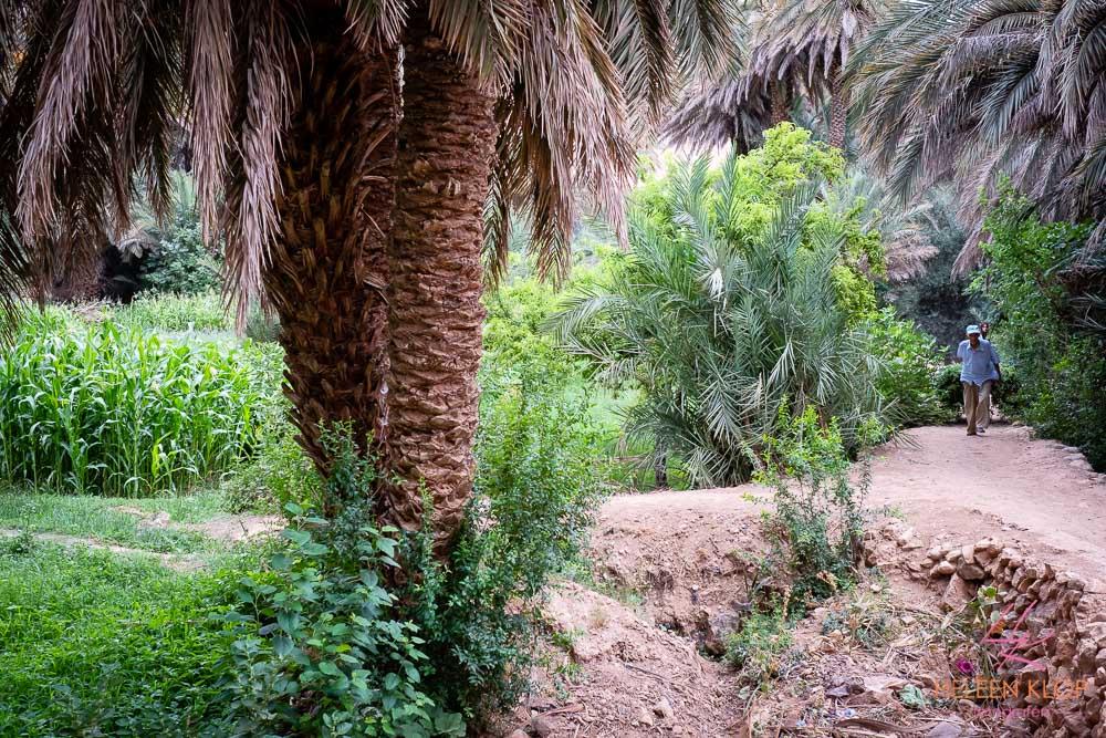 Tinghir tuinen met groentes en fruitbomen eeuwenoude lemen dorpjes en kasbah's