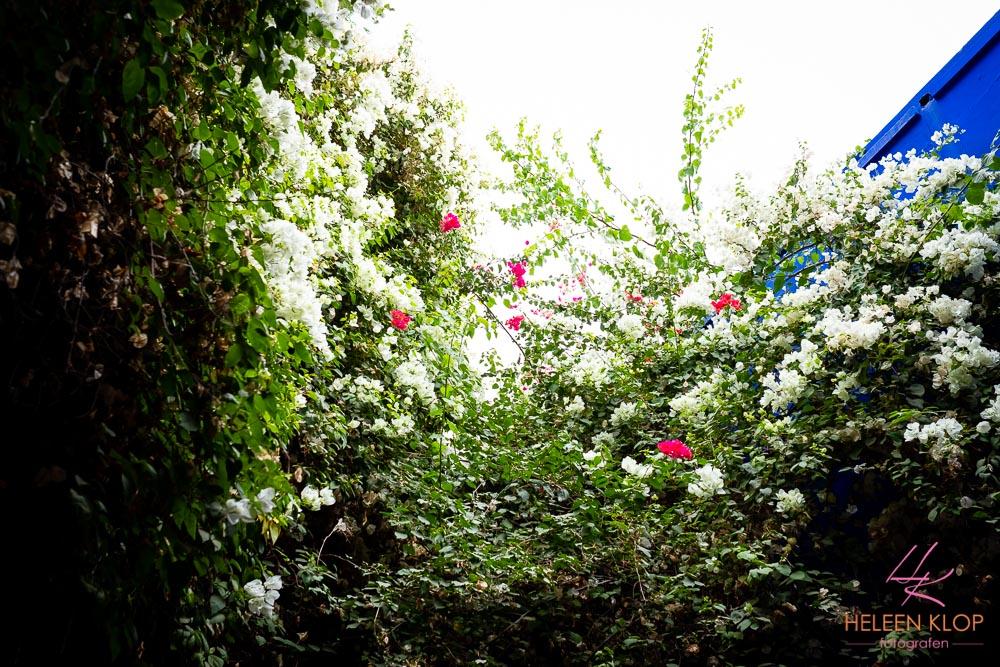 De tuin Majorelle