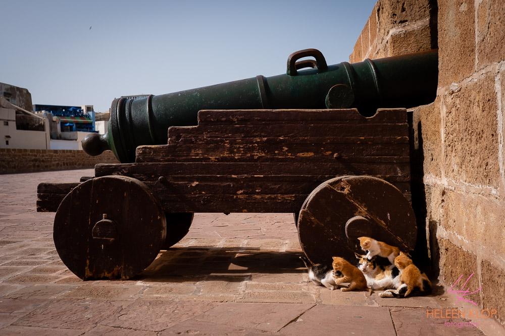 Stadsmuur met kanon en katten