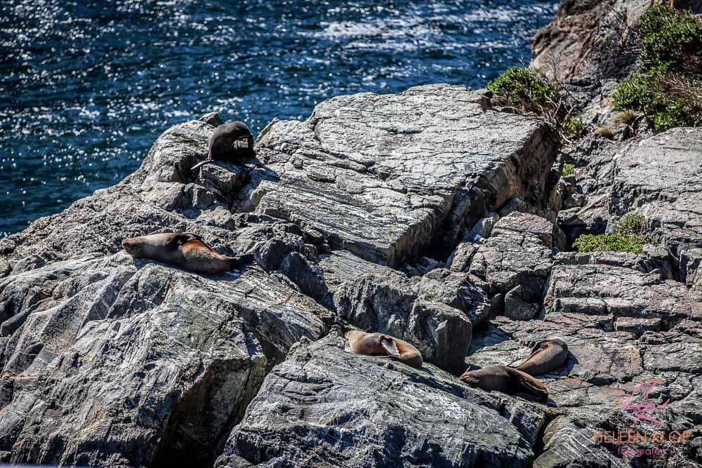 Milford Sound 011
