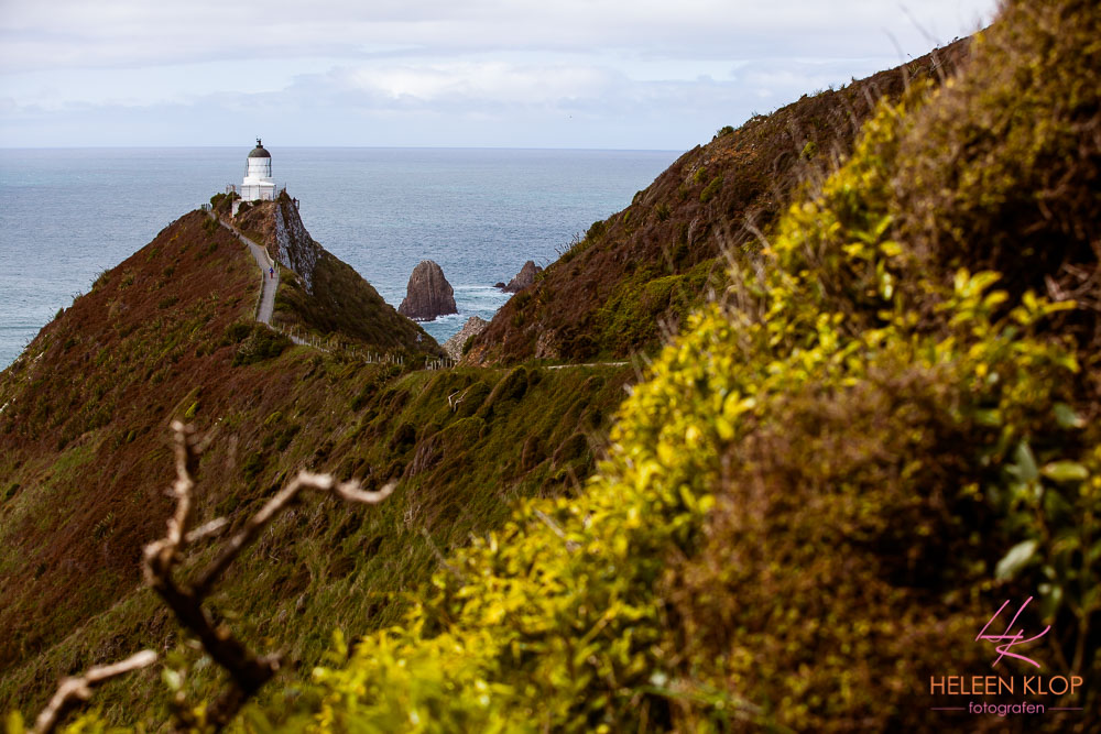 Nugget Point 002