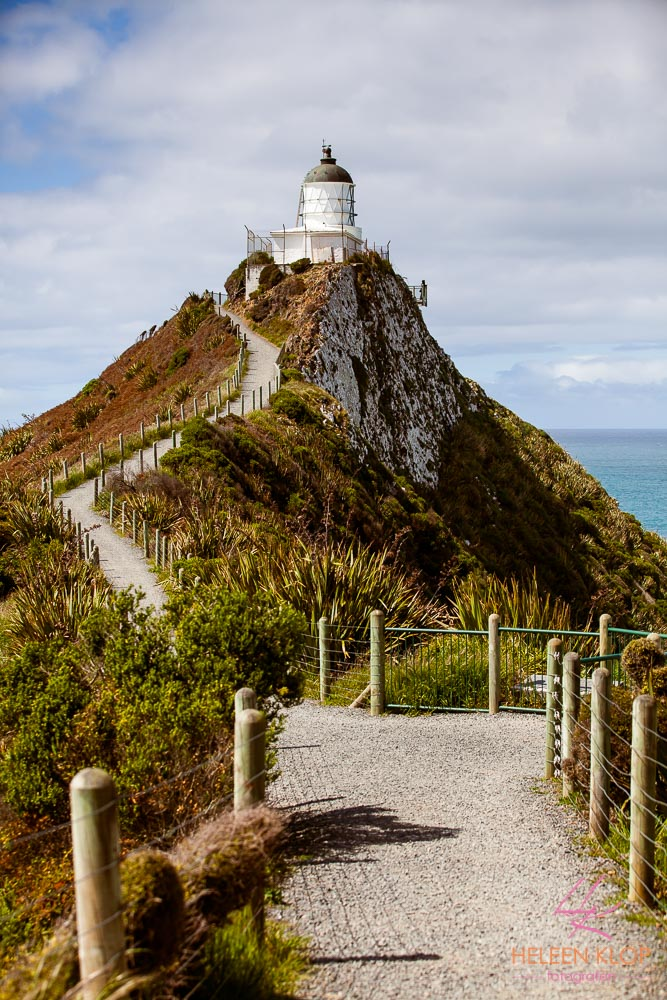Nugget Point 003
