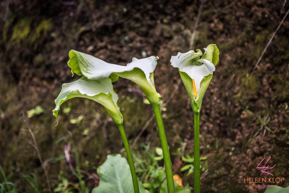 Bloemen in het wild