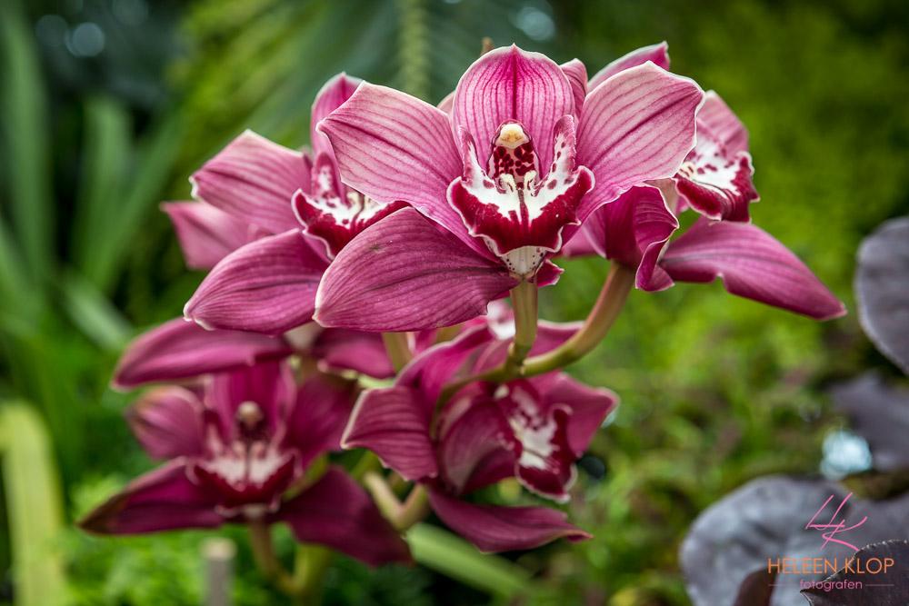 Orchidee Botanische tuin